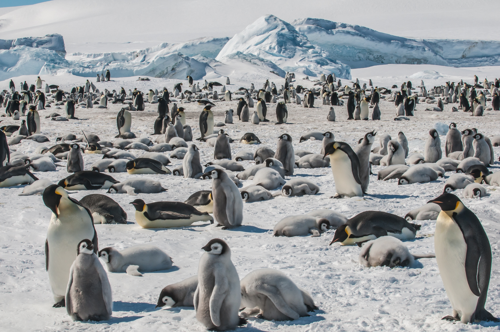 The Snow Hill Island Emperor Penguin rookery